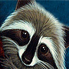 Prying raccoon puzzle